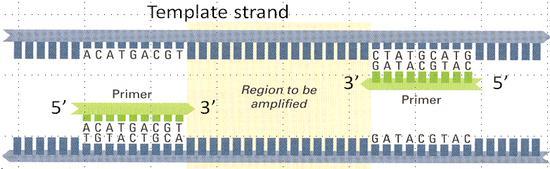 template_strand